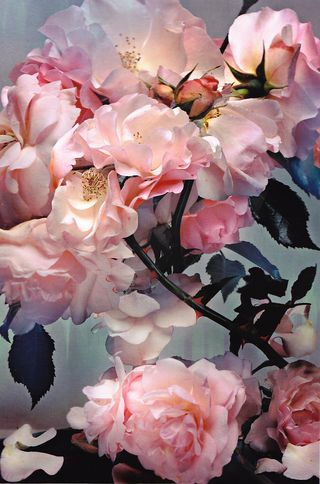Flowers_nk