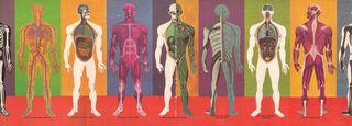 Humanbody9