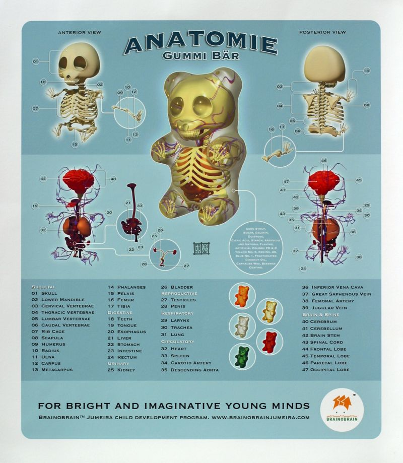 Gummy_bear_anatomy_jason_freeny